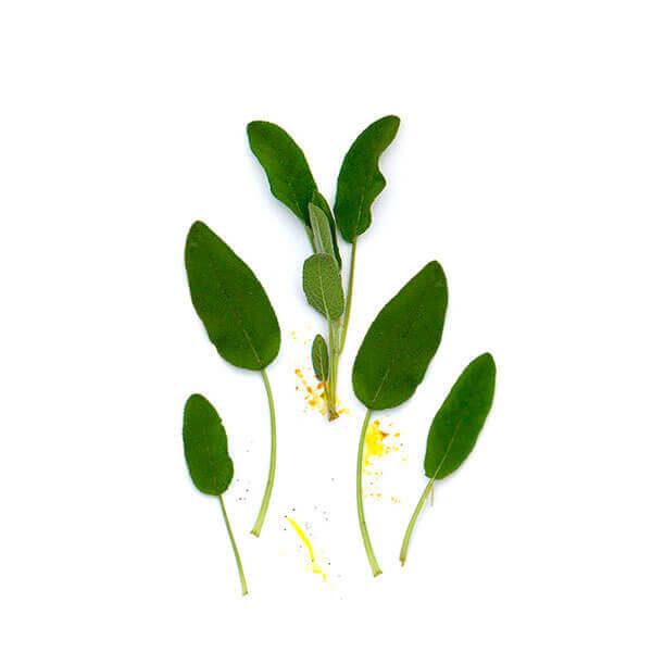 Salvia A Granel